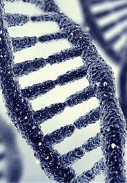 DNA: SUPERCOP