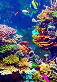 RESCUING CORAL REEF