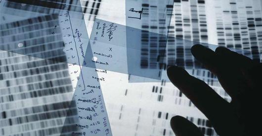 ADN SUPERFLIC